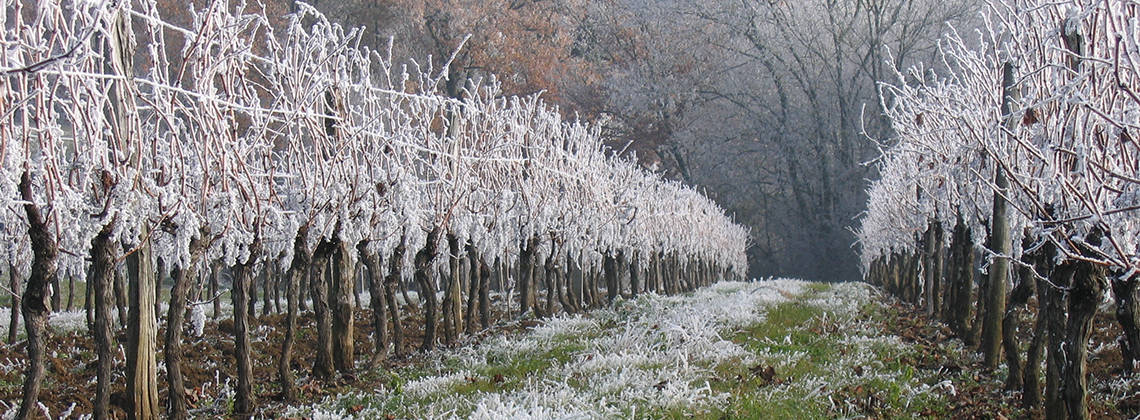 What-happens-to-Bordeaux-s-vineyards-in-winter_i1140